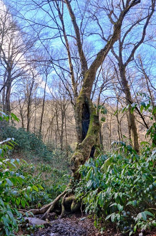 fall branch--8