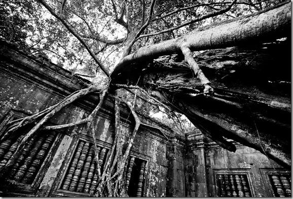 Beng Mealea. Siem Reap, Cambodia