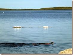 Snorkeling at Pennekamp