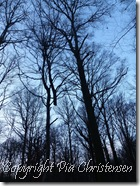 Træ uden rod