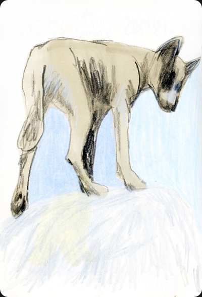 sketchdog_copy