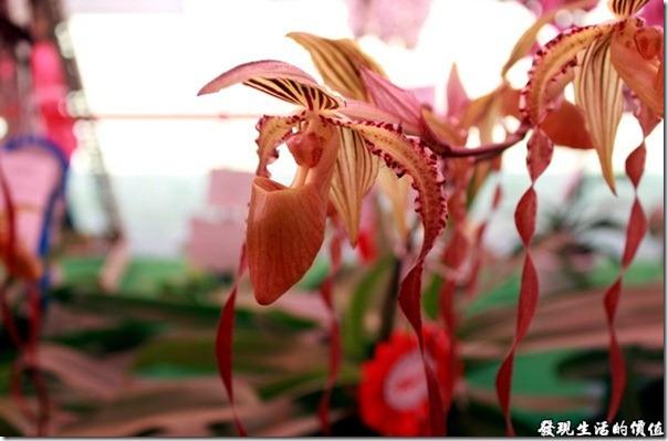2012台南蘭花展