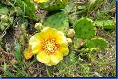 cactus 2011-06-10 004