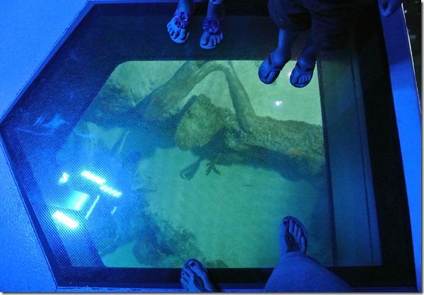 Sea Life Aquarium 221