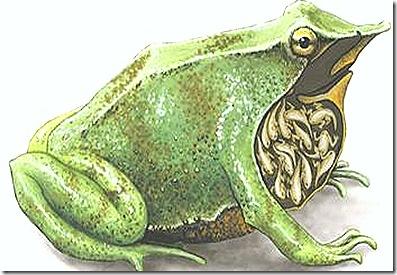 amphibia-prental-care