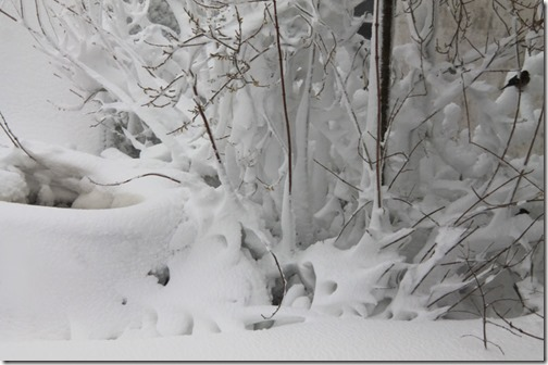 9-snow