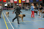 20130510-Bullmastiff-Worldcup-0914.jpg