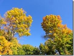 autumn sky (2)