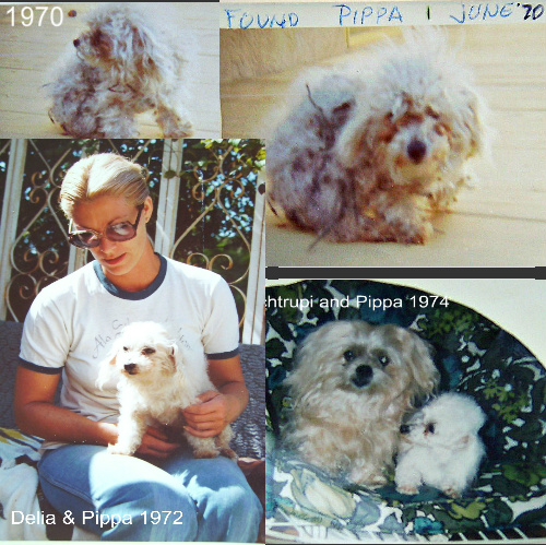 In 1970 Delia found Pippa in a field all caught up in weeds.  She cared for her until Pippa passed in 1982.