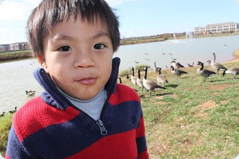 ducks 019