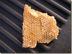 beeswax comb