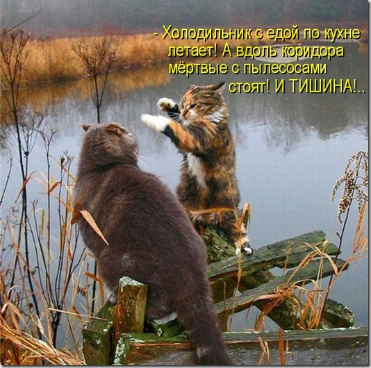 kotomatritsa_P