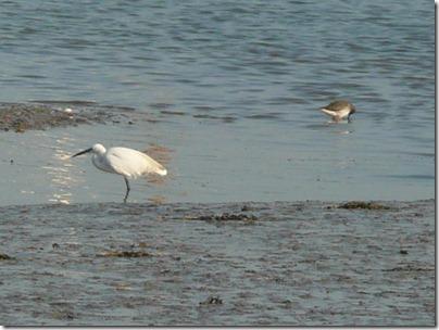 Suffolk Online - Woodbridge Birds