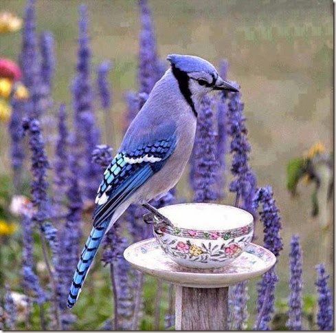 bom dia azulzinho