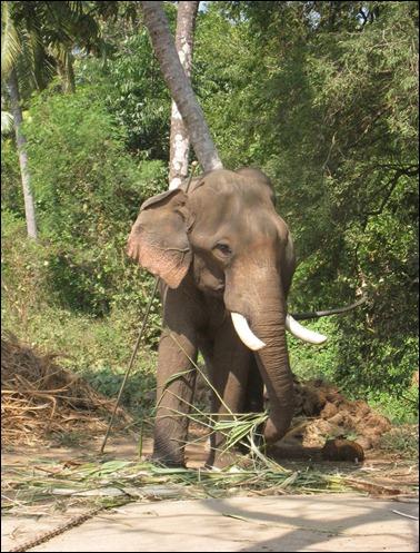 Elephant Sactuary VI