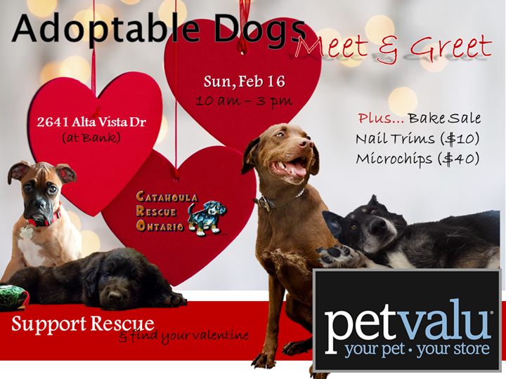 CRO DraftPoster Pet Value Feb 16 ALTA VISTA