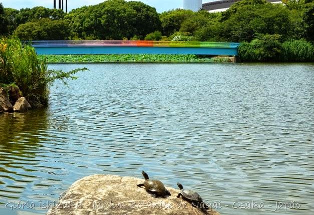 8 - Glória Ishizaka - Jardim Botânico Nagai - Osaka