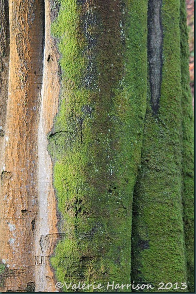 51-mossy-tree