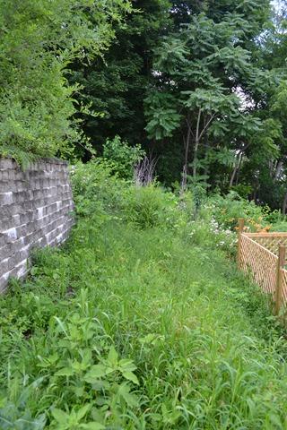 Hill Garden in July