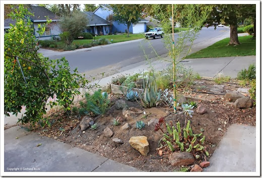 131007_driveway_succulent_bed_after_01