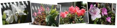 View Spring garden 1