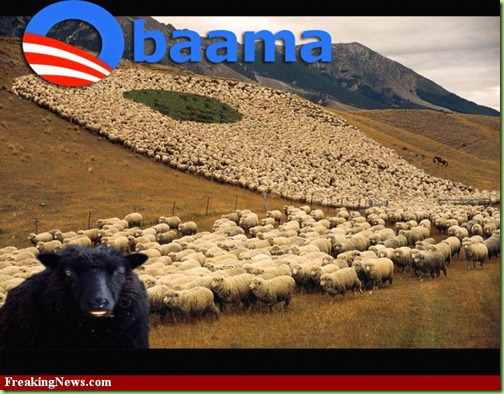Obaama-sheep--46604