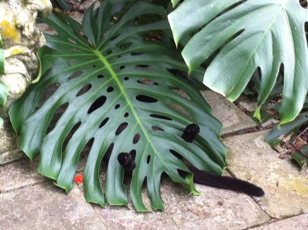 Os gatos não são muito bons em esconde-esconde 25