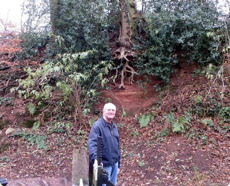 SAM_0029 Andy helper and tree roots