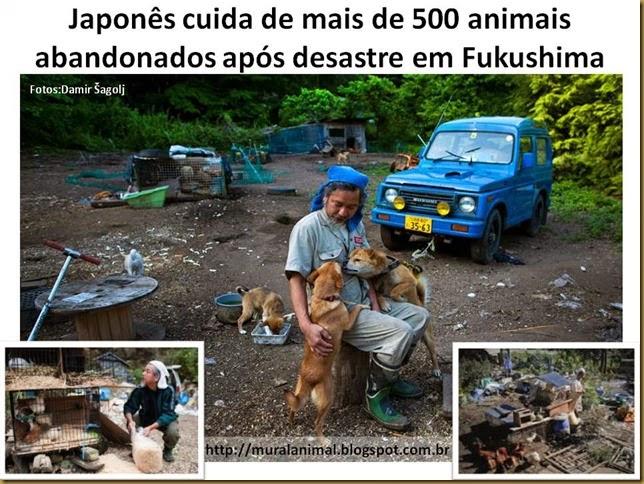 Japonês cuida de mais de 500 animais abandonados