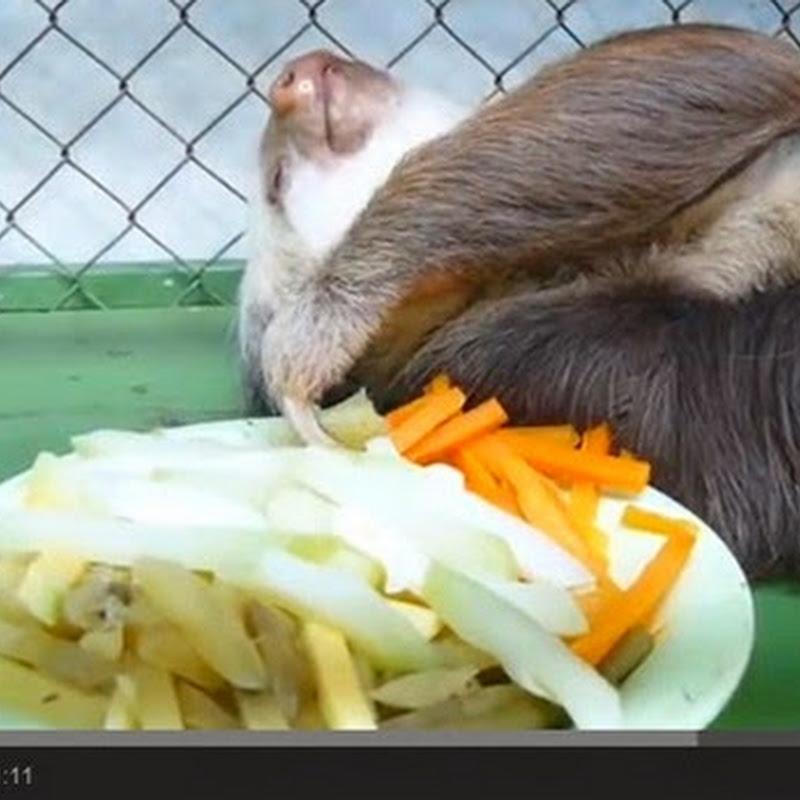 Sloth θέλει μόνο τα καρότα του