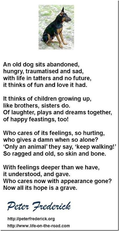 AN ABANDONED DOG B