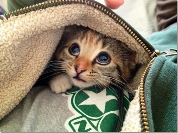 cute-baby-animals-29
