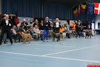 20130510-Bullmastiff-Worldcup-1338.jpg