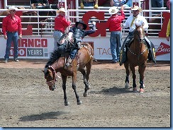 9372 Alberta Calgary - Calgary Stampede 100th Anniversary - Stampede Grandstand - Calgary Stampede Rodeo Novice Bareback Championship