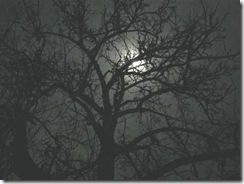 pear_moon