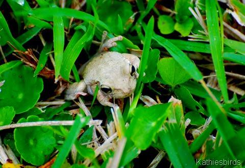 5. frog-kab