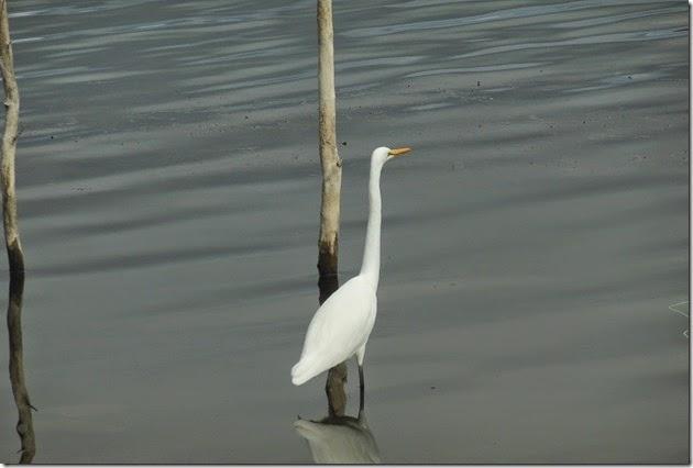White Bird Waruma