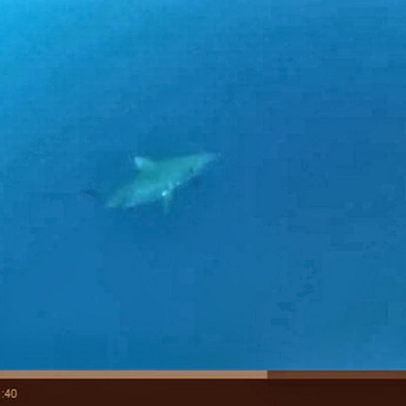 Επίθεση από καρχαρία tiger