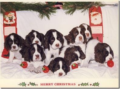 1987 puppy jpg