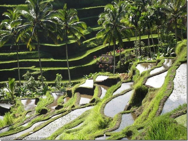 Terraced