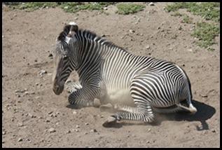 Zoo5 049