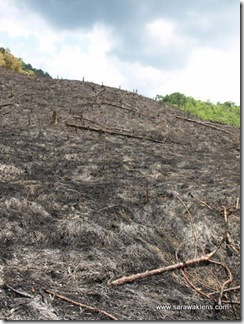 slash_burn_farming_09