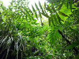 Lush Rainforest - Roseau, Dominica