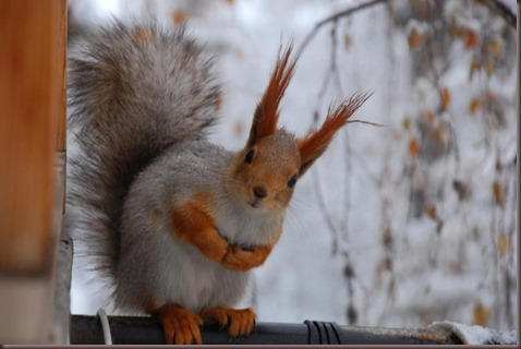 Amazing Animals Pictures Squirell (12)