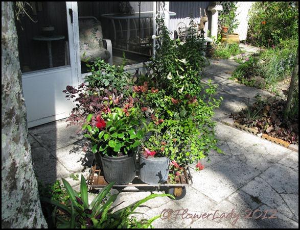 03-20-six-plants