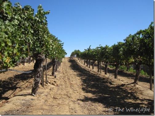 vineyard (400x300)