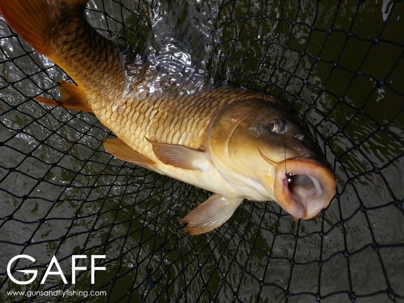 Fly Fishing for Carp (3).jpg