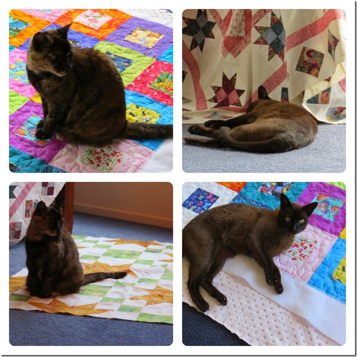Cat and quilts PicMonkey Collage