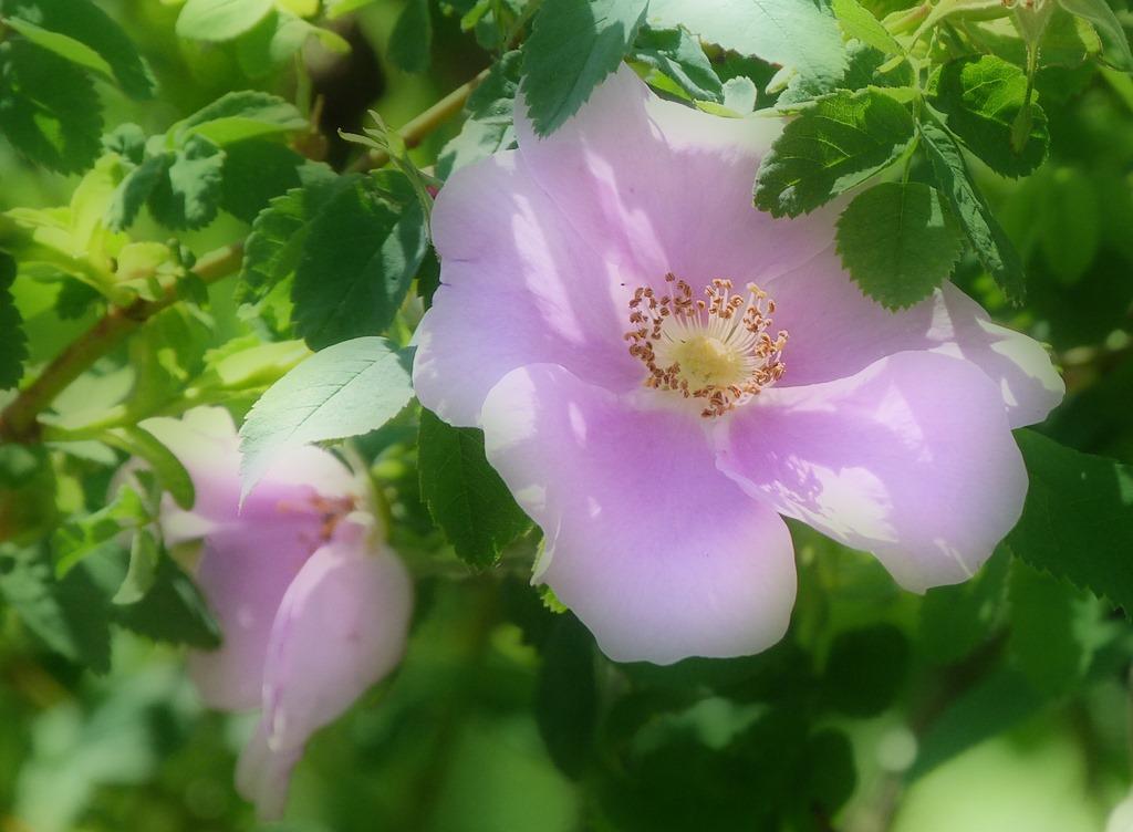 [Wildflowers%25201%255B4%255D.jpg]