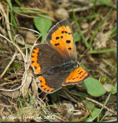38-small-copper